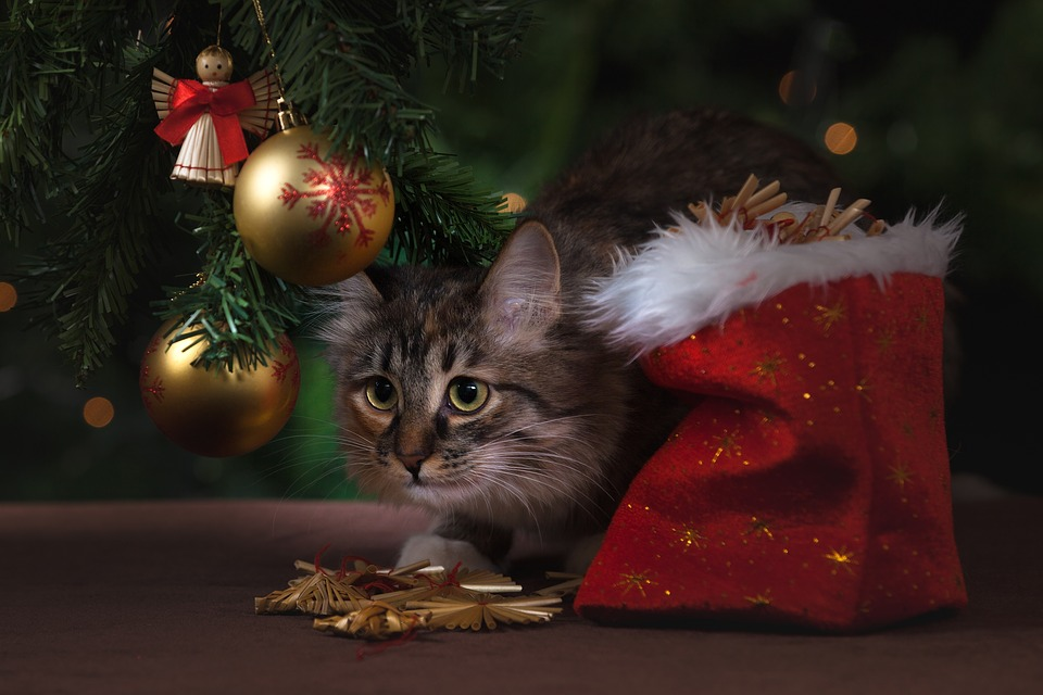Best Gift Ideas For Your Pet